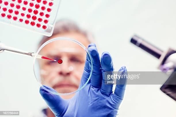Wissenschaftler untersuchen und aus pipette im Labor experimentieren
