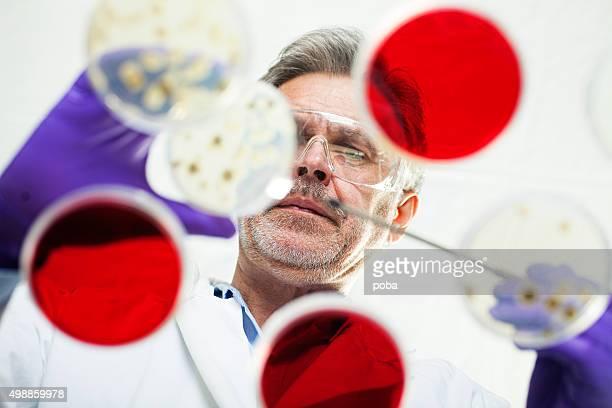 Wissenschaftler untersuchen Kulturen in petri Gerichte