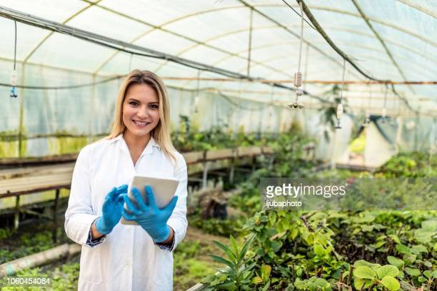 scientist examining plant in greenhouse - agronomist stock pictures, royalty-free photos & images