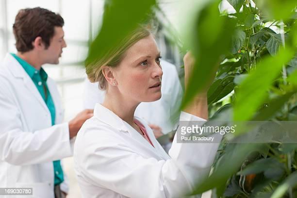 Wissenschaftler untersuchen Pflanzen im Gewächshaus