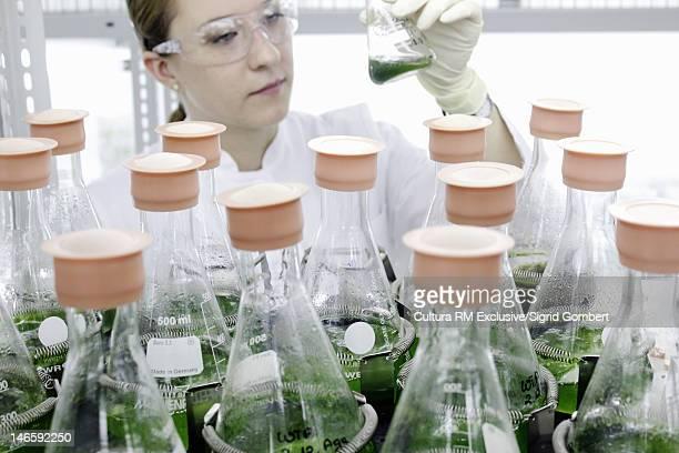 scientist examining plants in jars - sigrid gombert stock-fotos und bilder