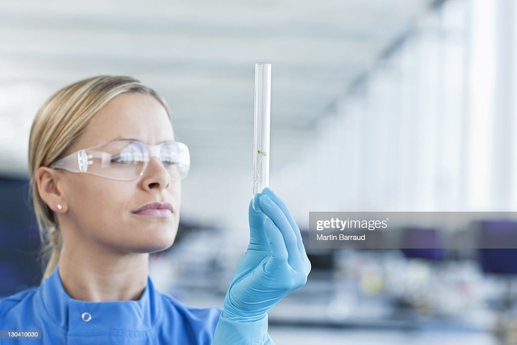 Scientist examining plants in test tube in lab : Stock Photo