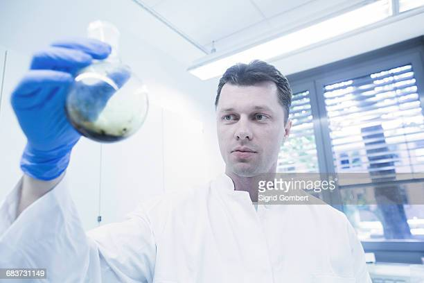 scientist examining sample in beaker - sigrid gombert stock pictures, royalty-free photos & images