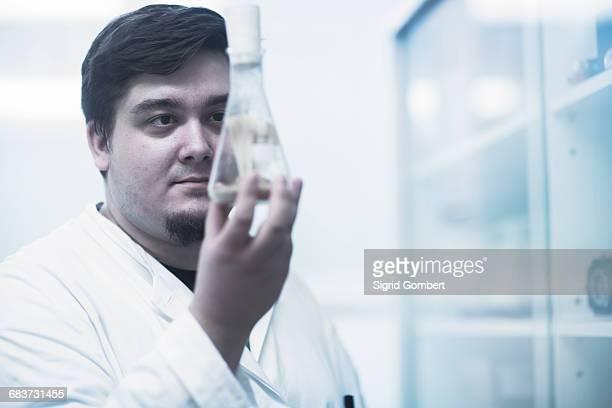 scientist examining sample in beaker - sigrid gombert fotografías e imágenes de stock