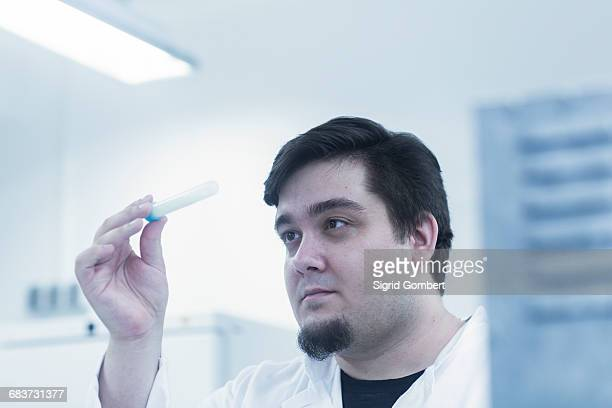 scientist examining sample in test tube - sigrid gombert stock pictures, royalty-free photos & images