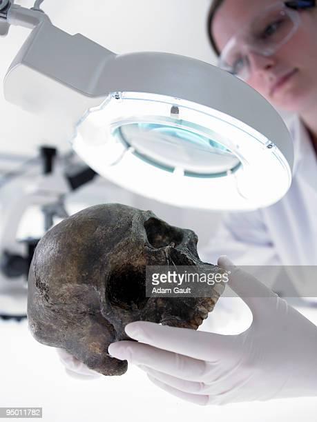 Scientist examining skull under magnification lamp
