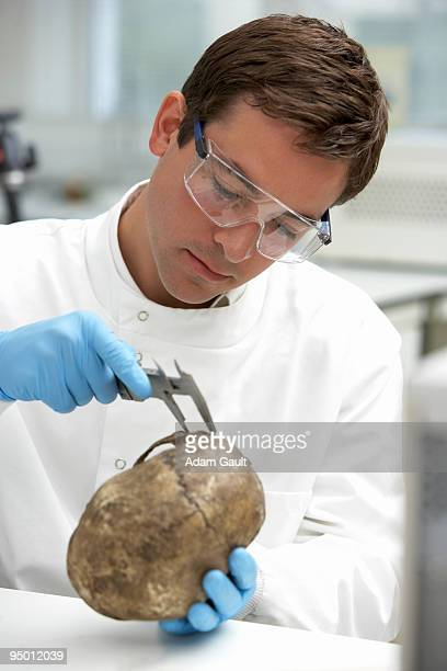 Scientist examining skull with calipers