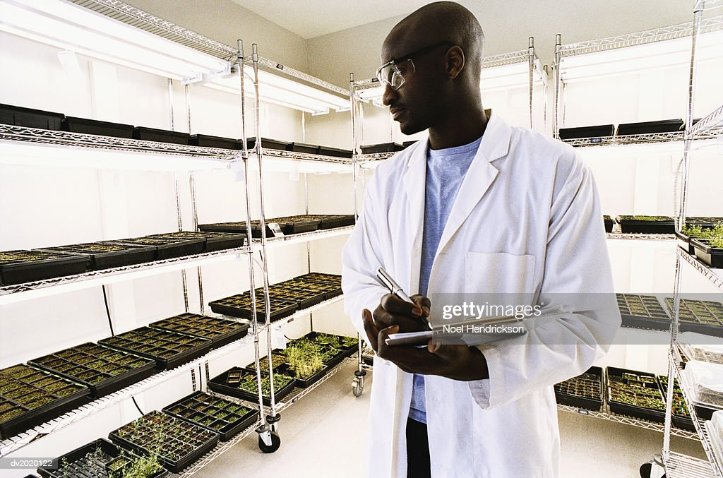 Scientist Examining Soil Samples in a Lab : Stock Photo