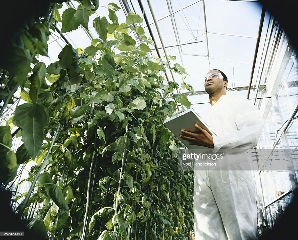Scientist Holding a Clipboard Examining Plants in a Greenhouse : Stock Photo