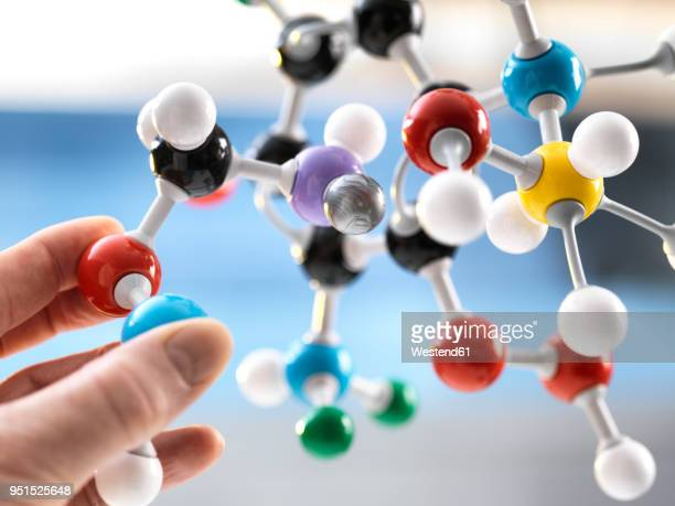 scientist holding a molecular model - molecules stock photos and pictures