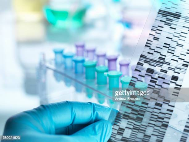 Scientist holding DNA gel in front of samples for testing in laboratory