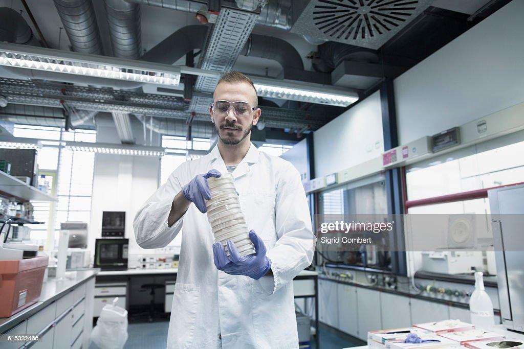 Scientist holding stack of petri dishes in a pharmacy laboratory, Freiburg im Breisgau, Baden-Württemberg, Germany : Stock-Foto