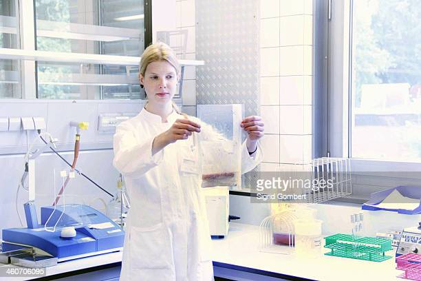 scientist holding up clear plastic bag of sample - sigrid gombert stock-fotos und bilder