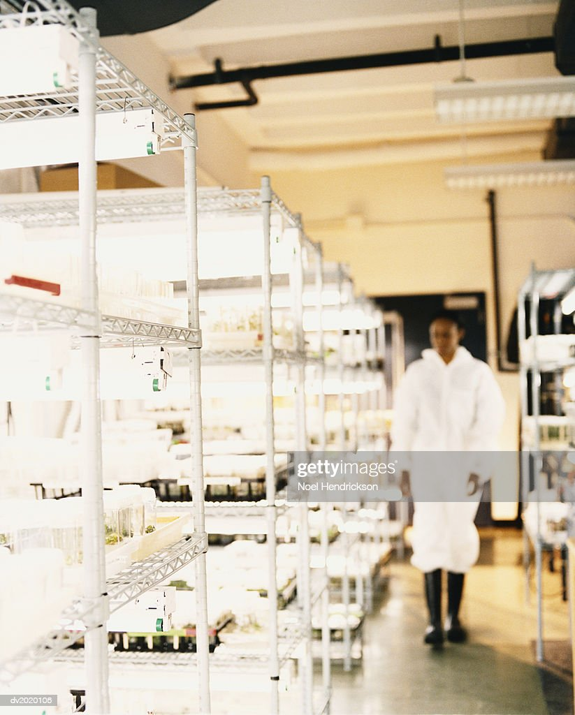 Scientist in a Lab : Stock Photo