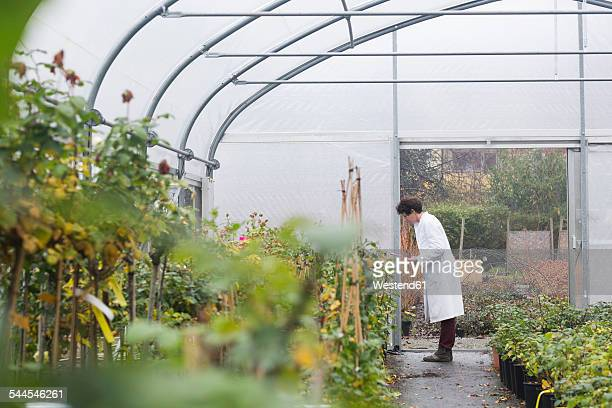 scientist in greenhouse examining plants - older woman bending over stock pictures, royalty-free photos & images