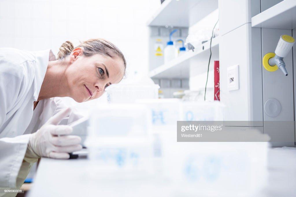 Scientist in lab examining samples : Stock-Foto