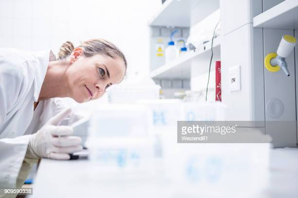 Scientist in lab examining samples