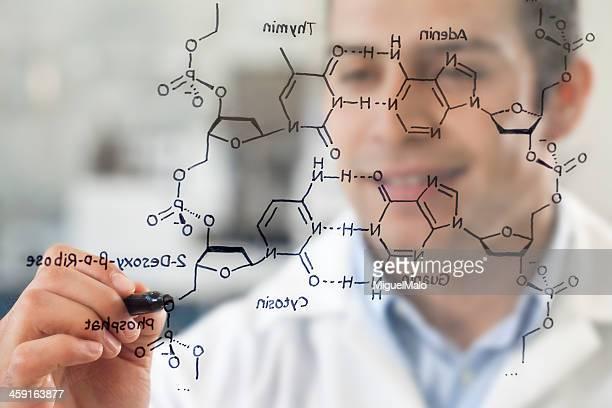 Scientist in Lab working on DNA Structure