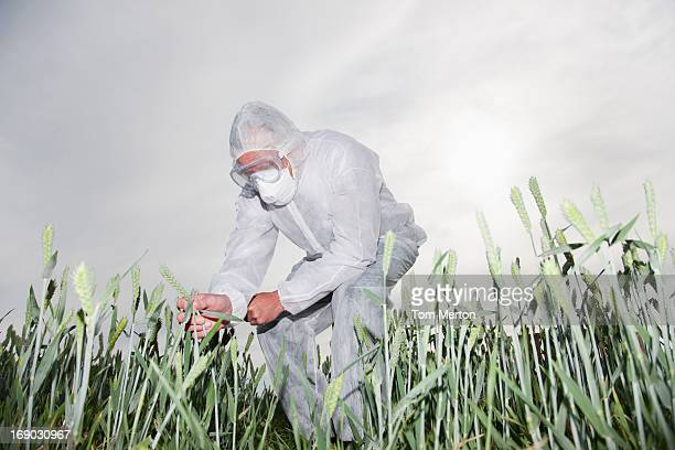 Scientist in protective gear examining plants