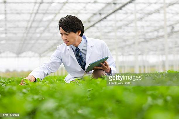 Scientist in rows of plants in greenhouse, holding digital tablet