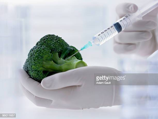 scientist injecting broccoli - needle plant part stock photos and pictures