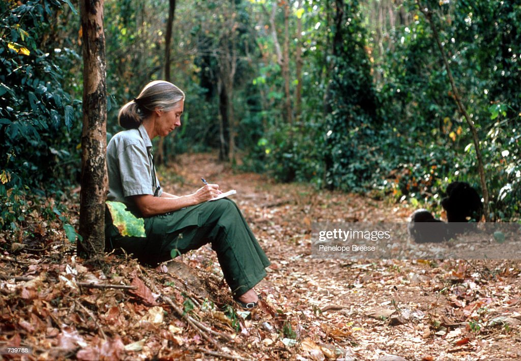 Scientist Jane Goodall... : News Photo