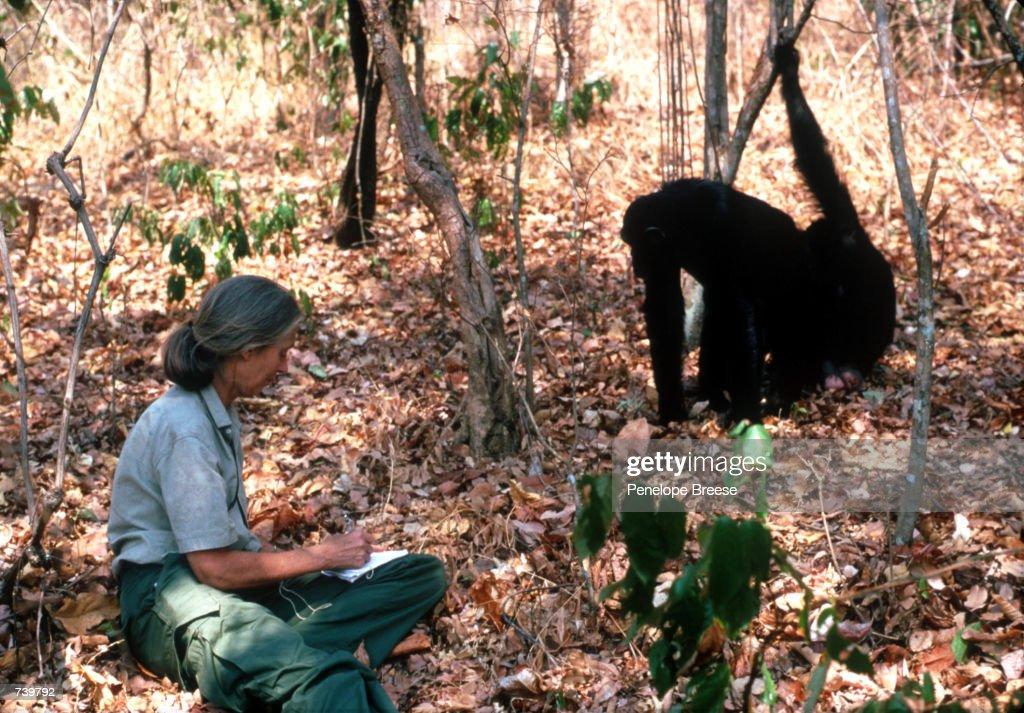 Scientist Jane Goodall... : News Photo