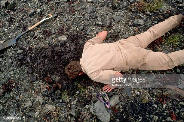 A scientist lies prone and smells the soil at the Bay of Isles in Knight Island Alaska USA to check for oil content