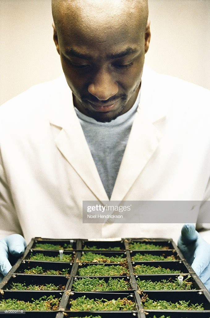 Scientist Looking at Soil Samples : Stock Photo