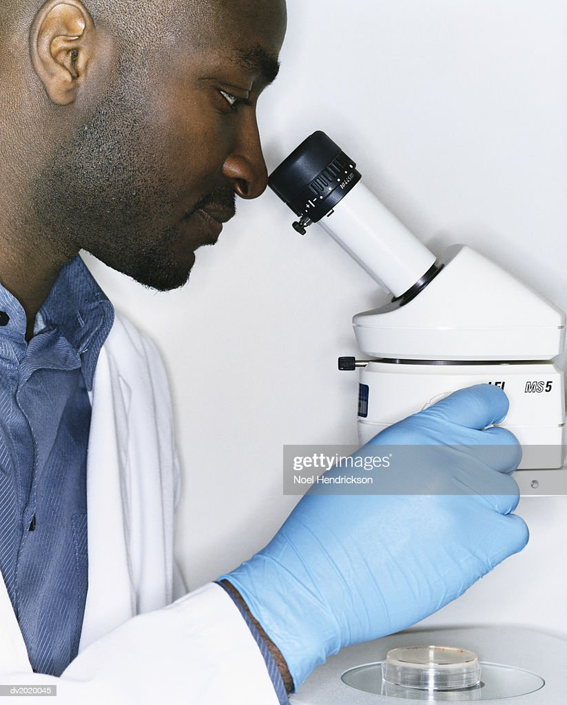 Scientist Looking Down a Microscope : Stock Photo