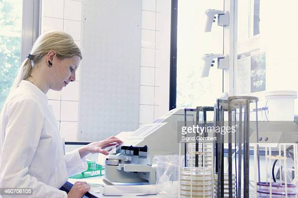 scientist looking down at petri dish - sigrid gombert stock-fotos und bilder