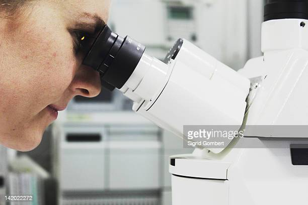 scientist looking through microscope - sigrid gombert stock pictures, royalty-free photos & images