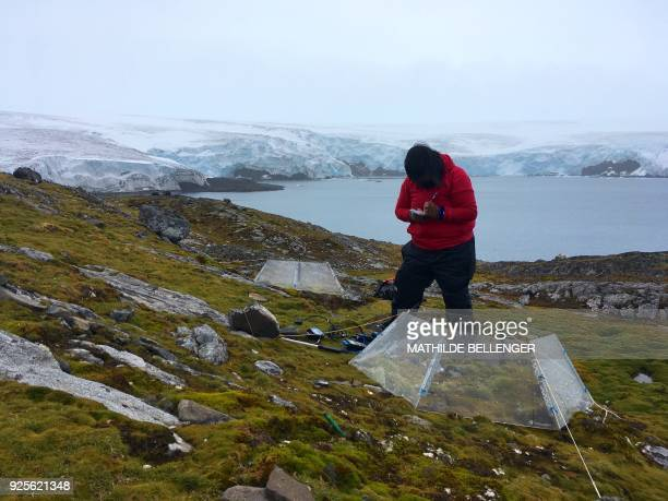 Scientist Marisol Pizarro takes the temperature of the soil in an opentop chamber where she studies how Antarctic mosses tolerate global warming on...