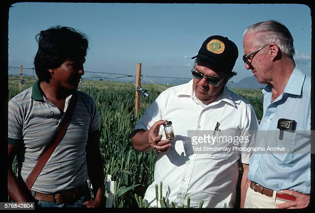 Scientist Norman Barlaug and two researchers examine a vial of rust fungus spores in an experimental wheat field in the Sonora region of Mexico...