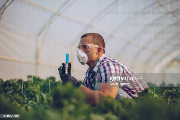 scientist on farm - microbiologist stock pictures, royalty-free photos & images