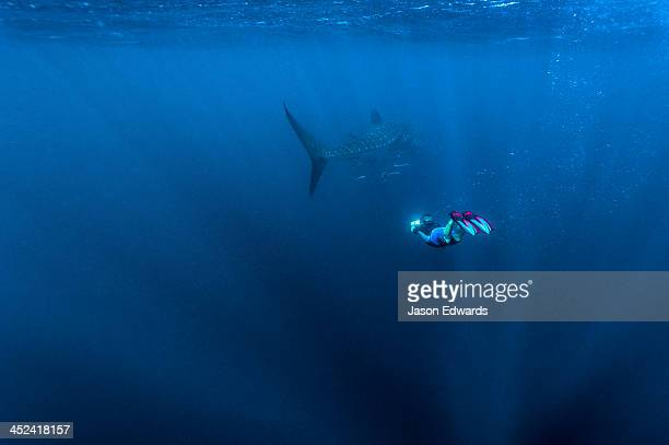 A scientist photographs the markings of a Whale Shark to identify it.