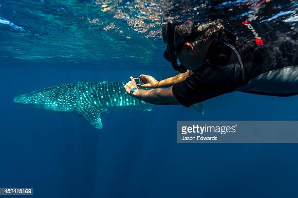 A scientist photographs Whale Shark skin markings for research.