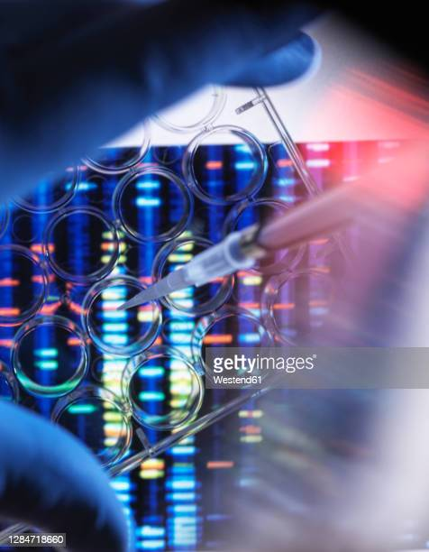 scientist pipetting sample in multi well plate for dna analysis with genetic results in background - genetic research stock pictures, royalty-free photos & images