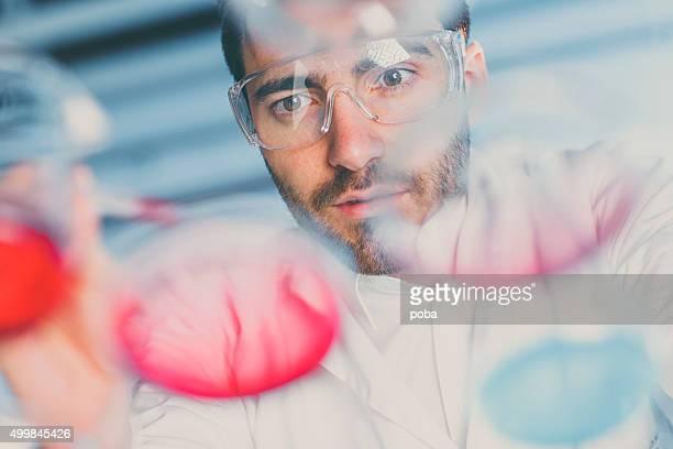 scientist pipetting sample into a petri dish in a laboratory - molekyl bildbanksfoton och bilder