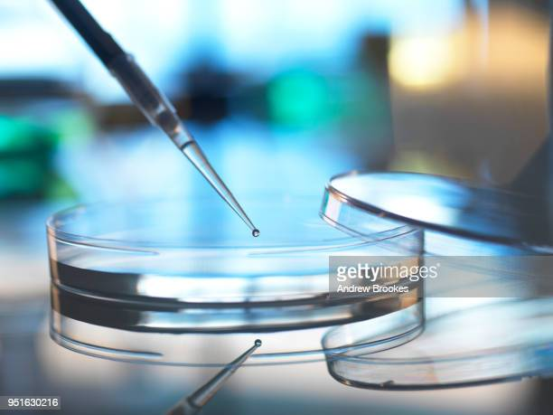 Scientist pipetting sample into petri dish in laboratory