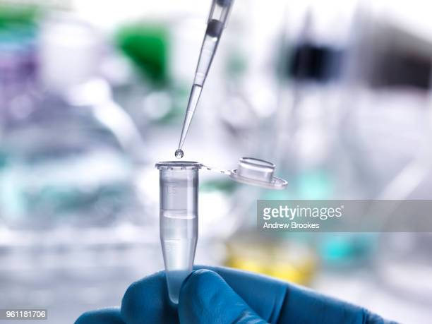 scientist pipetting sample into vial for laboratory experiment - new life stock pictures, royalty-free photos & images