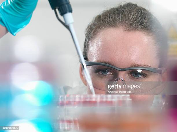 scientist pipetting stem cell cultures into tray for pharmaceutical research - geneticist stock pictures, royalty-free photos & images