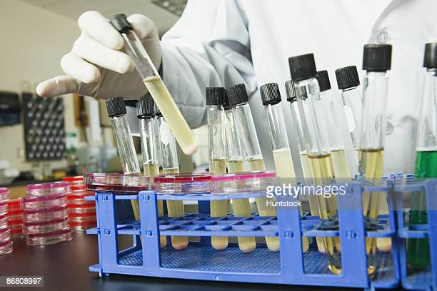 Scientist placing test tubes in a rack