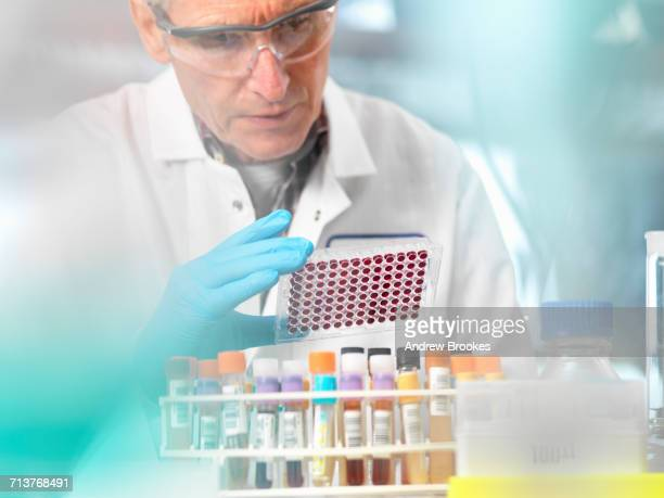 scientist preparing blood samples in a multi well plate for clinical testing in a laboratory - hematology stock pictures, royalty-free photos & images