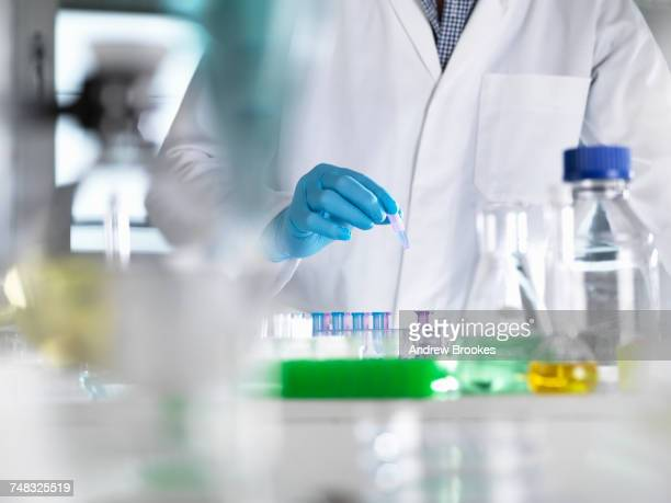 scientist preparing dna samples for testing in the laboratory - laboratory equipment stock pictures, royalty-free photos & images