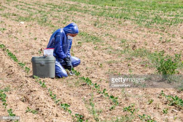 Scientist Researching and Taking Dirt Sample on a Field