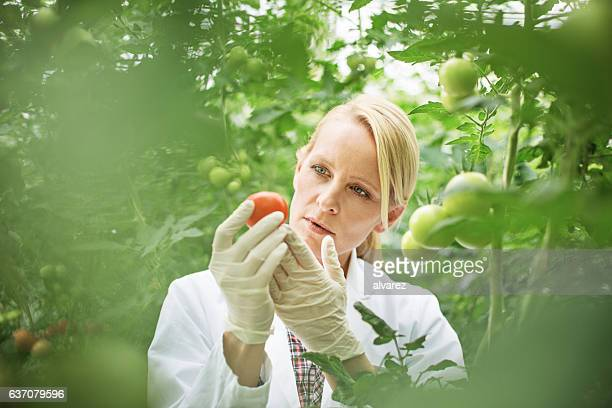 Scientist studying plant life