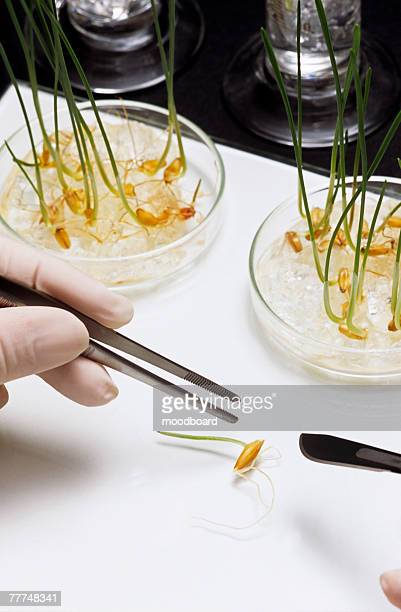 Scientist Studying Sprout Samples