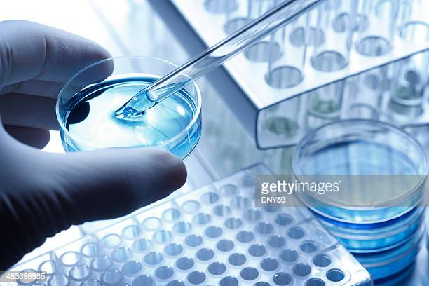 scientist taking a sample out of a petri dish using a pipette - science and technology stock pictures, royalty-free photos & images
