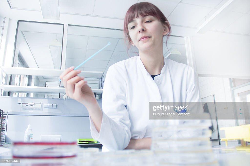 Scientist testing strip in lab : ストックフォト